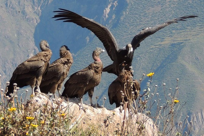 2 Day - Colca Canyon and Condor Tour from Arequipa, Peru - Group Service