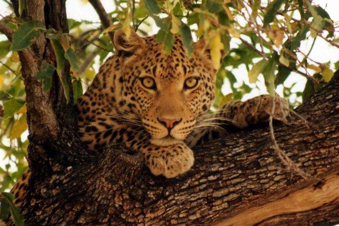 5 Days Tanzania Migration Safaris