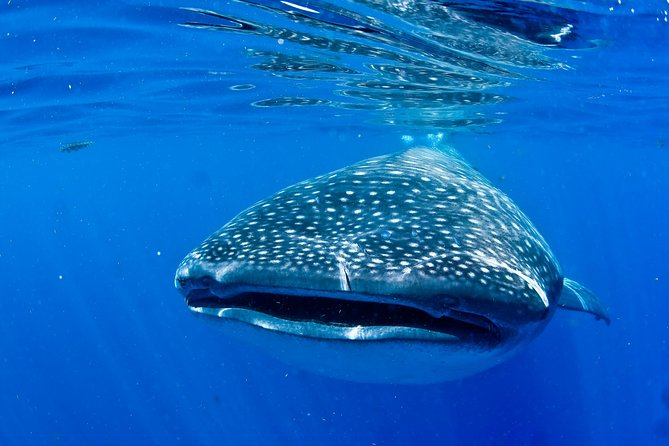 Swim with Whale Sharks from Playa del Carmen photo 8