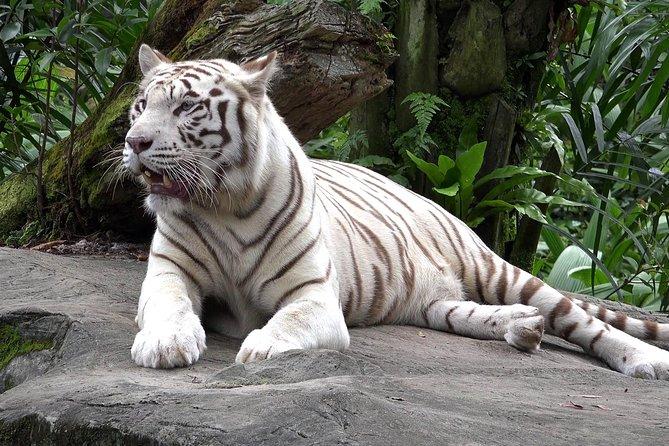 Jardim Zoológico de Delhi Tigres Brancos e Leões com Visita ao Forte Velho