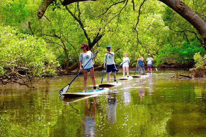 Byron Stand Up Paddle Nature Tour