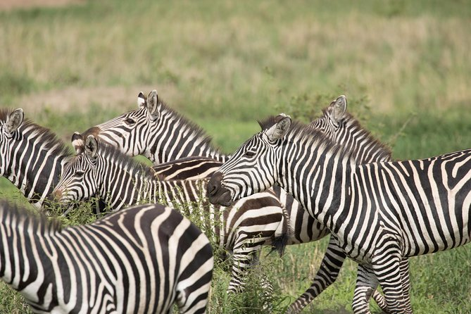 5 Days Tanzania Safari From Arusha photo 9
