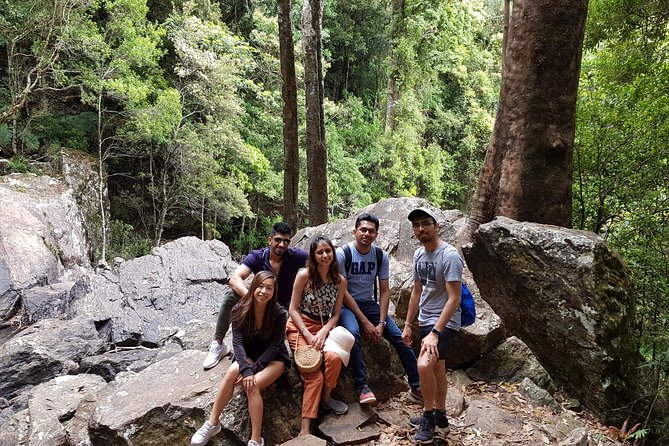 Gold Coast Mountains Tour Including Springbrook National Park and Mt Tamborine