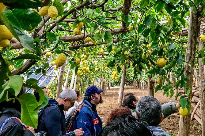 Private Tour: The Path of the Lemons photo 7