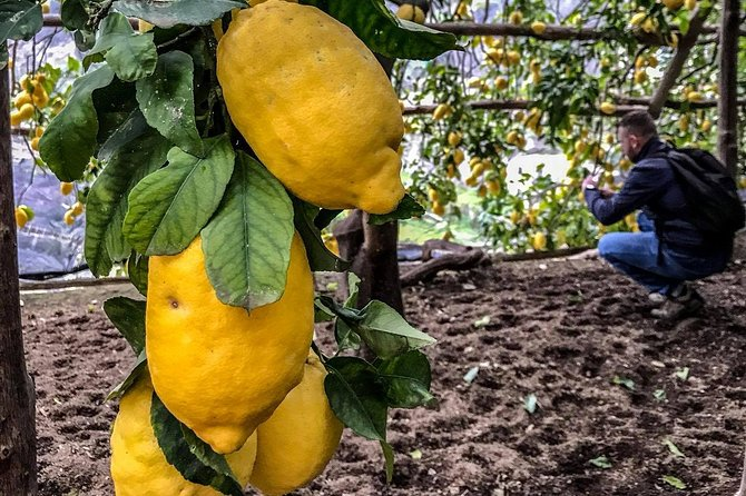 Private Tour: The Path of the Lemons