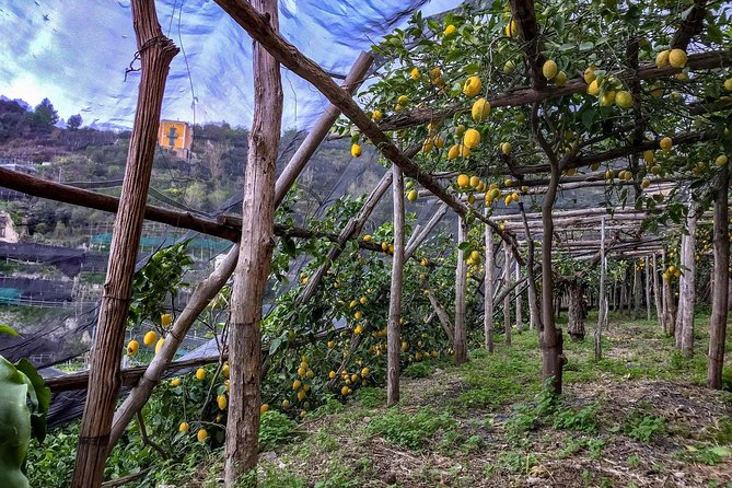 Private Tour: The Path of the Lemons photo 6