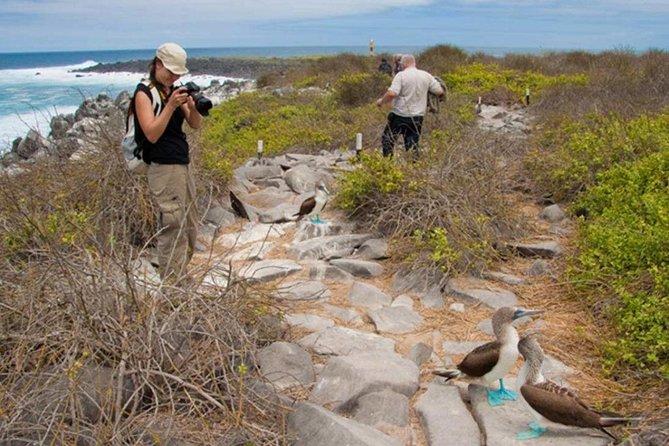 Seymour North Island & Las Bachas Full-Day Tour