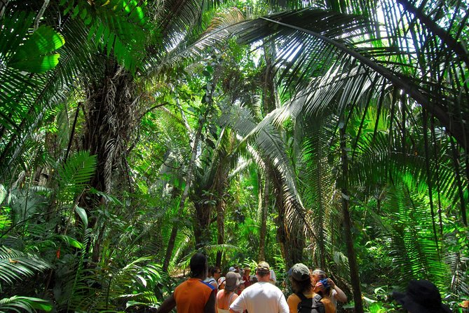 Explore Cockscomb Wildlife Sanctuary Hiking, Jungle, River Tubing, Bird Watching