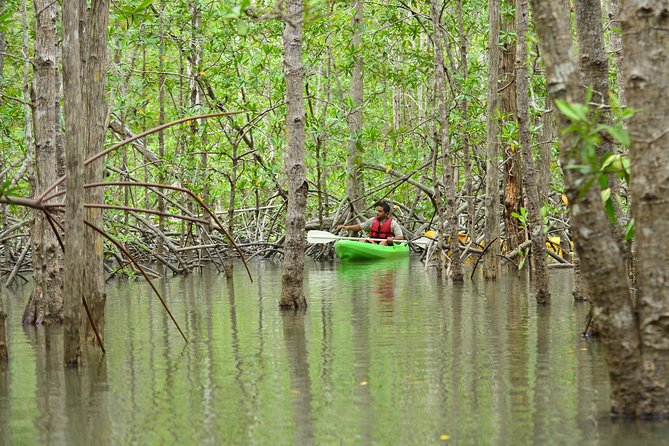 Damas Island Mangrove Kayaking Tour from Manuel Antonio photo 3