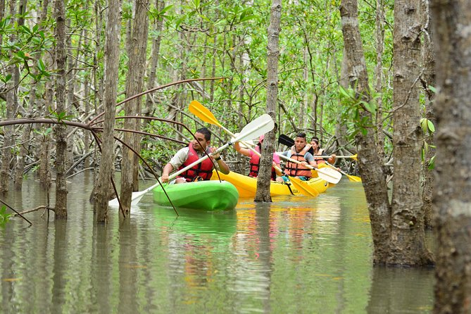 Damas Island Mangrove Kayaking Tour from Manuel Antonio photo 4