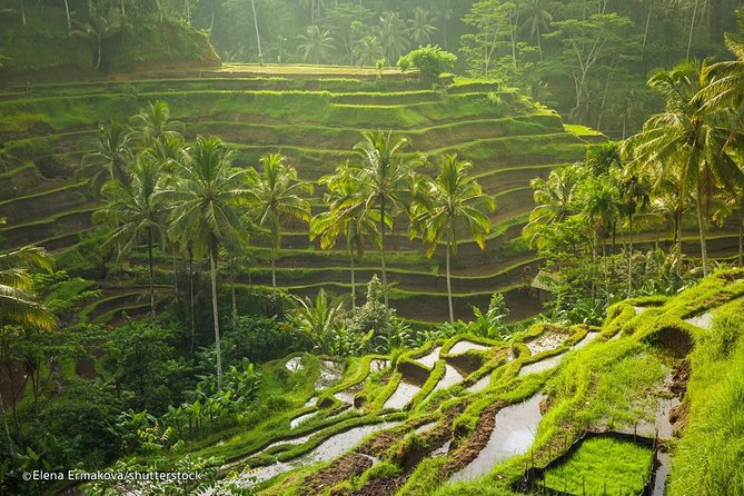 The Best Private Tours Volcano Downhill Cycling-Rice Terrace-Agrotourism-Lunch
