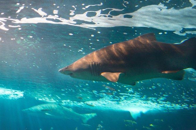 Sla de wachtrij over: toegangsbewijs voor het aquarium van Gijon