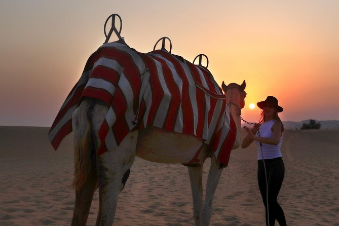 Dubai Sunset Camel Trekking With BBQ Dinner at VIP Camp