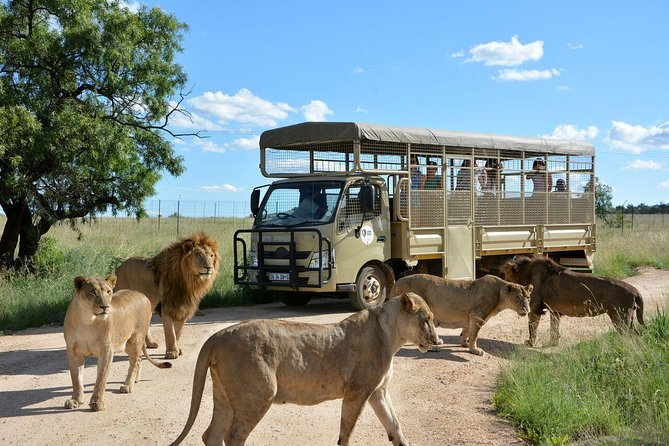 Lesedi Cultural Village and Lion Park Day Tour from Johannesburg photo 7