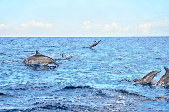 Mauritius Wild Dolphin Swim Including Transportation