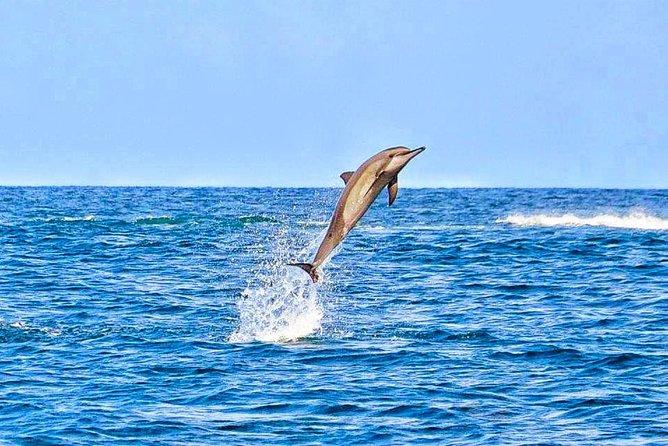 Dolphin in Tamarin Bay
