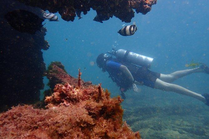 Wreck Dive in Salvador