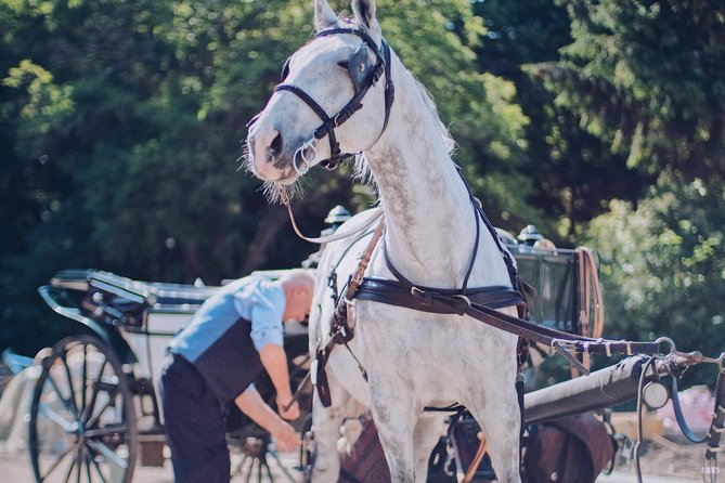Secrets of the Fiakers incl. 60 min. horse-carriage ride