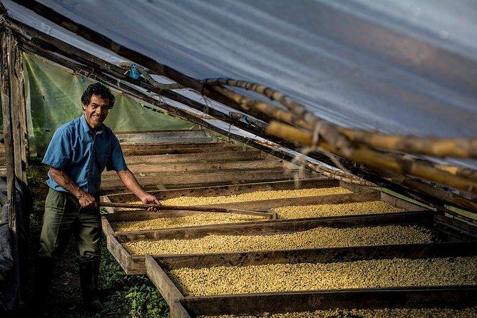 Productor de Café secando granos