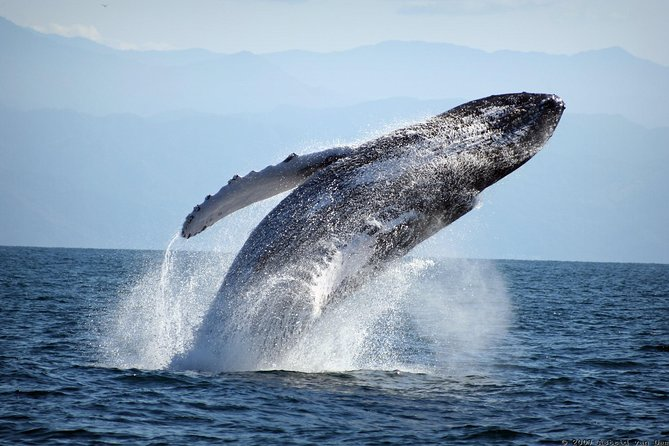 Private boat for your group only: Whale Watching with Naturalist Guide photo 3