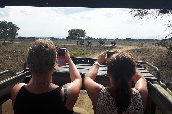 Mikumi National Park Day Trip From Dar Es Salaam Road Trip
