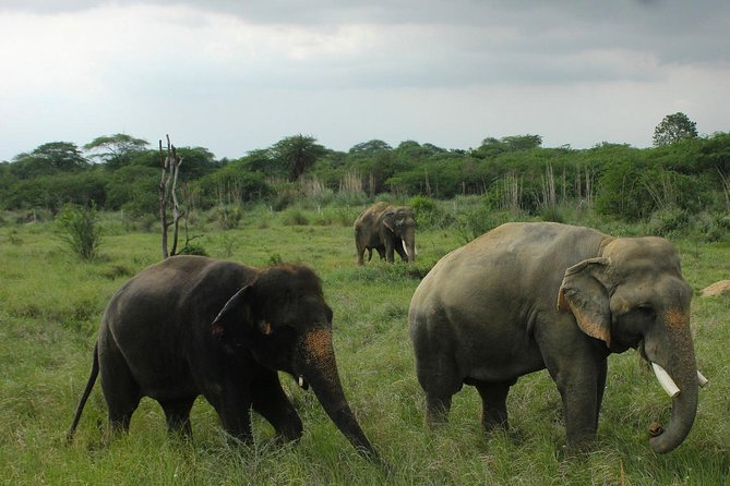 Pickup Jaipur e visita al Tajmahal & Wildlife SOS agra con i trasporti privati