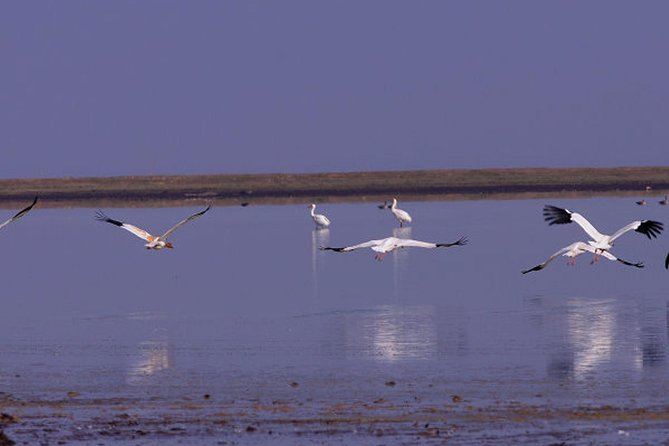 Bird Watching Tour at Wucheng Poyang Lake Nature Reserve From Nanchang
