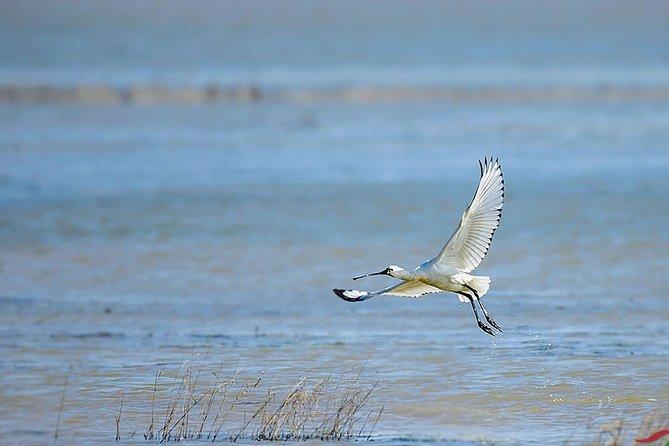 Bird Watching Tour at Nanji Hill Poyang Lake Nature Reserve From Nanchang