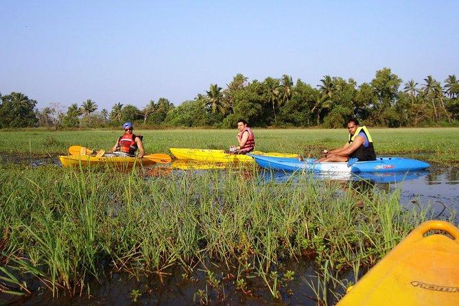 Kayaking on Sal Backwaters - Goa