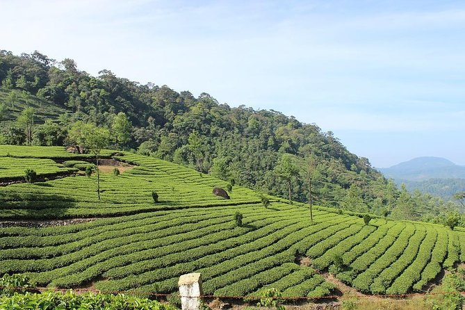 Full Day Tour Of Munnar