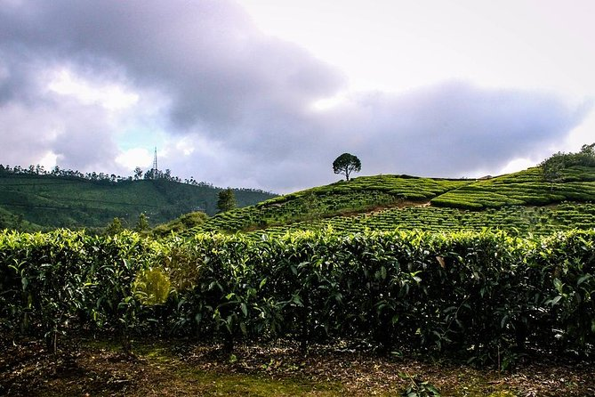 Full Day Trekking Tour In Munnar With Refreshments