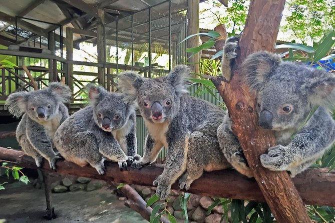 Cairns 2-Day Combo: Great Barrier Reef Cruise and Kuranda