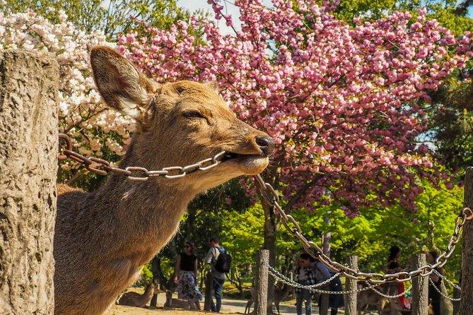 Day Trip To Nara From Osaka