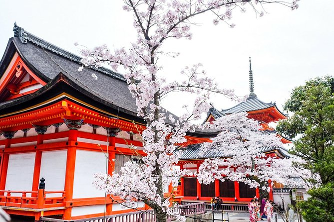 Cherry Blossom Season In Kyoto