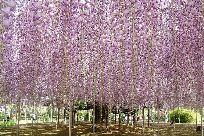 Hitachi Seaside Park & Ashikaga Flower Park