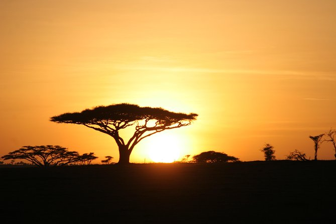 5 Days Tanzania Safari From Arusha photo 8