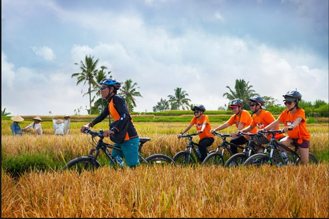 Private Full Day Trip Enjoy-Cycling To The Rice Field Of Ubud-Tirta Empul Temple