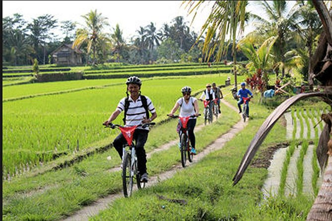 Best Private Tours-Cycling To Rice Fields Of Ubud Village-Yeh Pulu Temple-Lunch