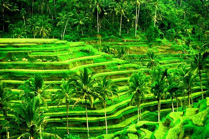 Best Private Trip-Bali Bird Park-Ubud Palace And Market-Tegalalang Rice Terrace