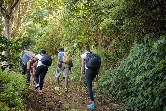 Blue Mountain Peak Hiking Tour from Kingston