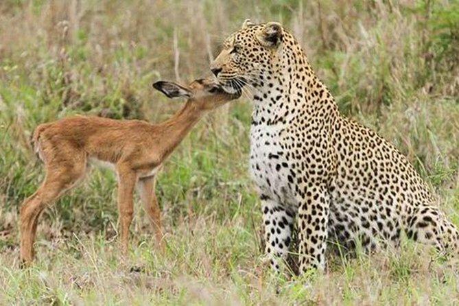 Jhalana Safari Park Leopard- One Jungle Jeep Safari And One Night Stay In Hotel