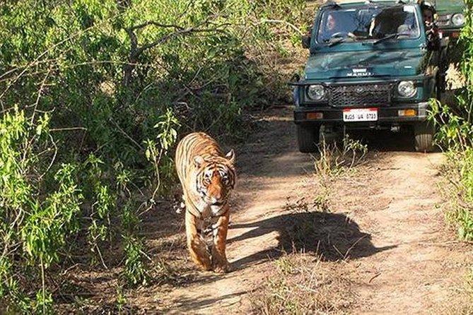 SARISKA WILD LIFE TOUR BY PRIVATE CAR WITH JUNGLE SAFARI GYPSY