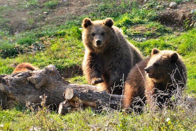 Slott och björnar på samma dag-Privat rundtur från Bukarest