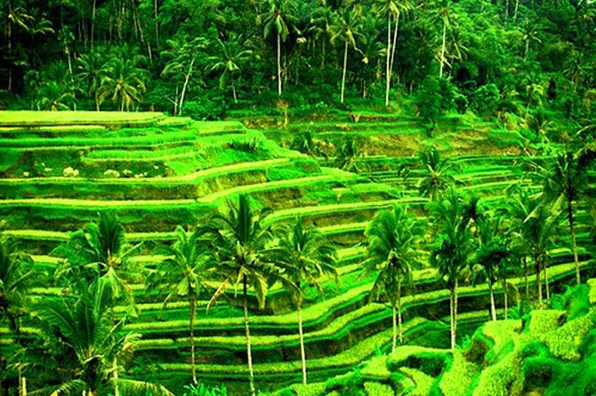Amazing Tours-Kanto Lampo Waterfall-Jungle Swing-Rice Terrace-Tampak Siring