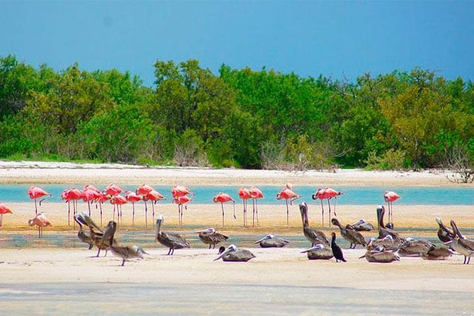 HOLBOX ISLAND TOUR from Riviera Maya and Cancun (Private)