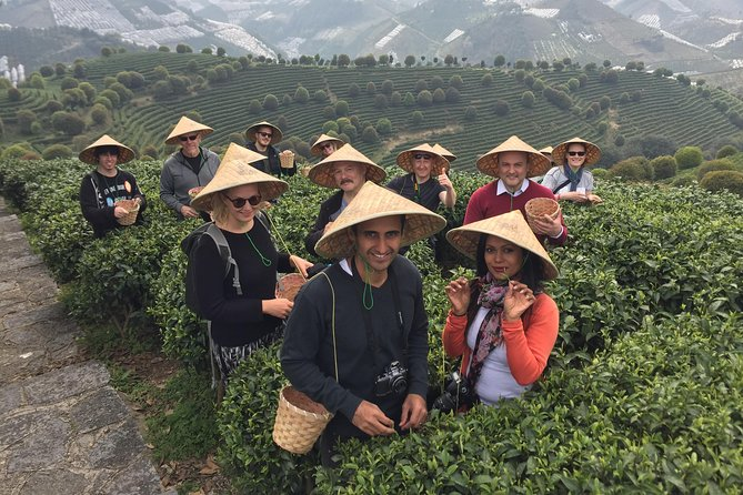 Private Tour-Yangshuo Seven Fairies Peak tea plantation and Xianggong hill