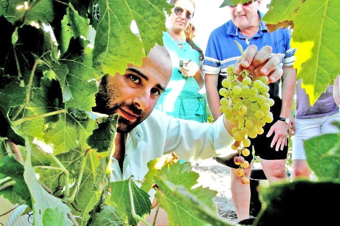 Full Day Private Sherry Wine Experience from Cádiz