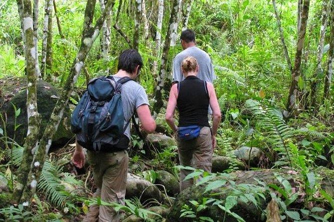 Private Tour: Half Day Tour Bukit Lawang & Orang Utan Jungle Trekking