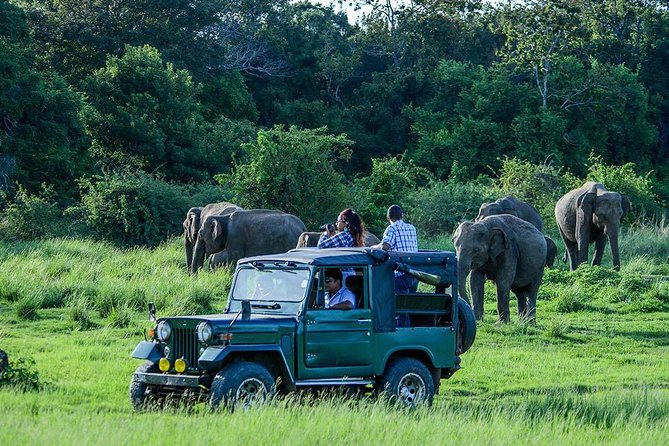 Udawalawe Safari Day Trip from Bentota & Surroundings - All Inclusive