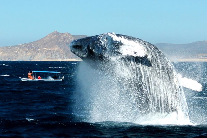 Cabo Whale-Watching-Snorkel tour with Open bar and Lunch included